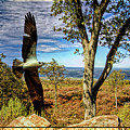 Double Exposure Osprey And High Point Nj by Geraldine Scull