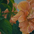 Double Hibiscus by Anita Wann