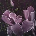Double Iris by Darren Yarborough