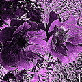 Double Poppies In Purple by Marian Bell