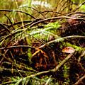 Double Rainforest by Jeff Kornelis