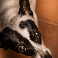 Dough-eyed Dog by Jorgo Photography - Wall Art Gallery