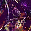 Dove Birds Animals Nature  by PixBreak Art