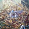 Dove Nesting by Bryan Alexander