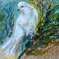 Dove by Olesya Sytnyk