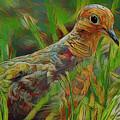 Dove Painterly by Deborah Benoit