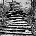 Dovedale Steps by John Edwards