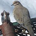 Doves New Pal by Lizi Beard-Ward