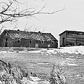 Down On The Farm Bw by Bonfire Photography