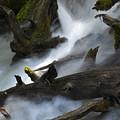 Downstream by Matthew Fredricey