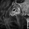 Downward Facing Squirrel by Brent Martin - My Photography Adventure