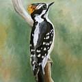 Downy Woodpecker by Angeles M Pomata