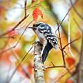 Downy Woodpecker In Autumn Forest by Kerri Farley
