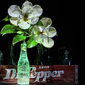 Dr Pepper And Magnolia Still Life by JC Findley