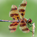 Dragon Fly by Ben Zell
