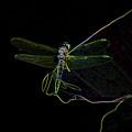 Dragon Fly by Farah Faizal