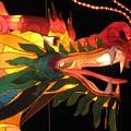 Dragon Head by Sheri Gundry