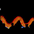 Dragon Lantern  by Kayvee Photography