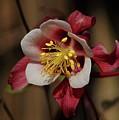 That Red Flower Thing  by Scott Ledingham-Park