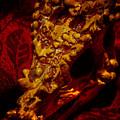 Dragon Skull by Robert Storost