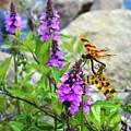 Dragonflies In Summer by Lyle Crump