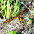 Dragonfly 1 by J M Farris Photography