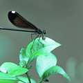 Dragonfly 1 by Wesley Farnsworth