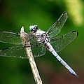 Dragonfly 12 by J M Farris Photography