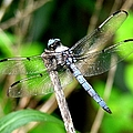 Dragonfly 13 by J M Farris Photography