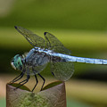 Dragonfly 14 by Christy Garavetto