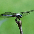 Dragonfly 14 by J M Farris Photography