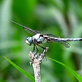 Dragonfly 15 by J M Farris Photography