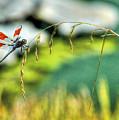 Dragonfly 3 by Sam Davis Johnson