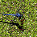 Dragonfly 73 by J M Farris Photography