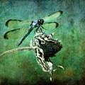 Dragonfly Art by Sari Sauls