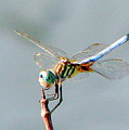 Dragonfly At Rest by T Guy Spencer