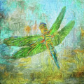 Dragonfly by Clare VanderVeen
