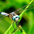 Dragonfly Close Up 2 by J M Farris Photography