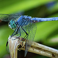 Dragonfly Color by Mitch Shindelbower