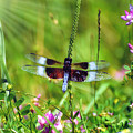 Dragonfly Delight by Kerri Farley