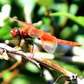 Dragonfly by Ellen Lerner ODonnell