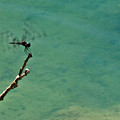 Dragonfly Exercising Wings by Douglas Barnett