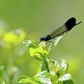 Dragonfly by Glenn Gordon