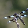Dragonfly Hanging On  by Jeff Swan