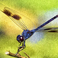 Dragonfly In Blue by Claudia Daniels