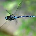 Dragonfly In Flight 2 by Ben Upham III