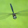 Dragonfly In Flight by Ben Upham III