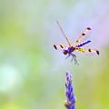 Dragonfly In Flight by Kerri Farley