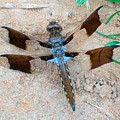 Dragonfly In The Sand by Mountain Femme