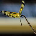 Dragonfly In The Wind by Wolfgang Stocker